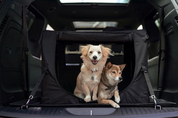 aventura-cjdr-autotrader-dog-lover-chrysler-pacifica-jeep-grand-cherokee