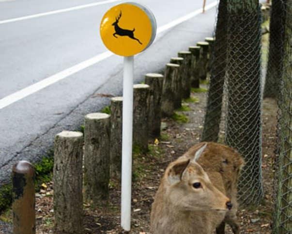Wildlife On The Road