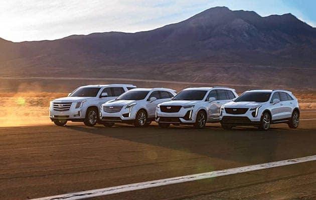 Cadillac vehicles lined up