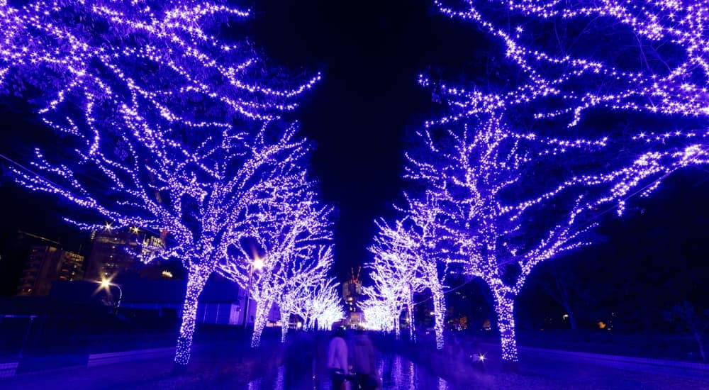 A display of trees lit up on a walkway near Indianapolis, IN is shown.