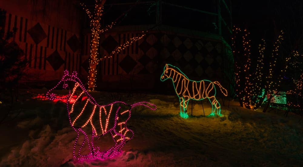 The Christmas light animal display you may see at the Indianapolis Zoo this year is shown.