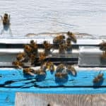 bee hive with bees on it