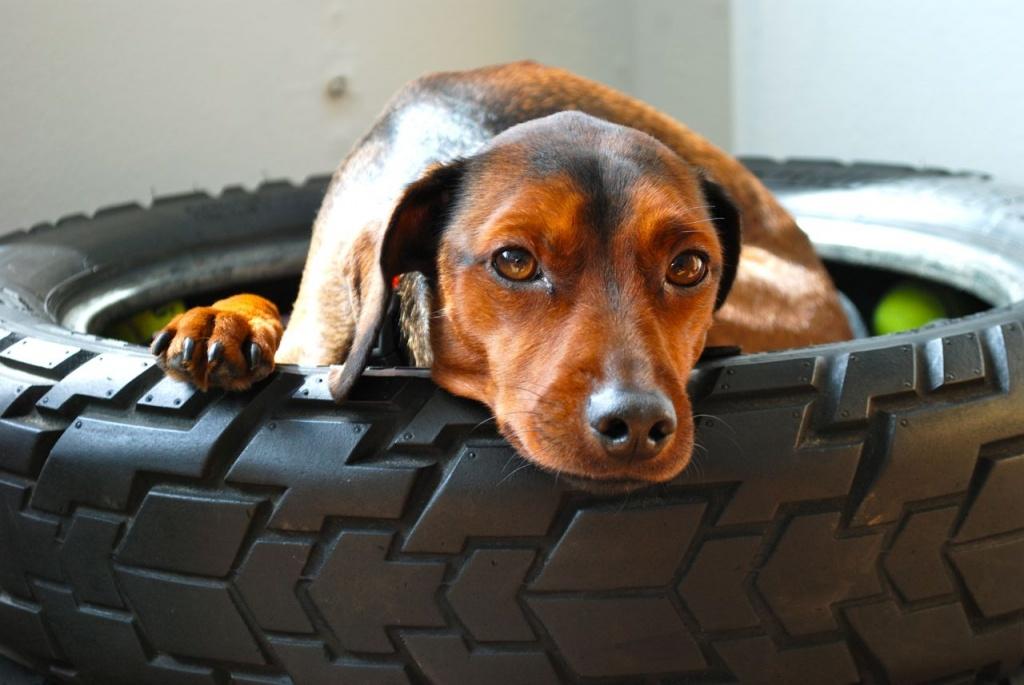 Tires Make Great Pet Beds