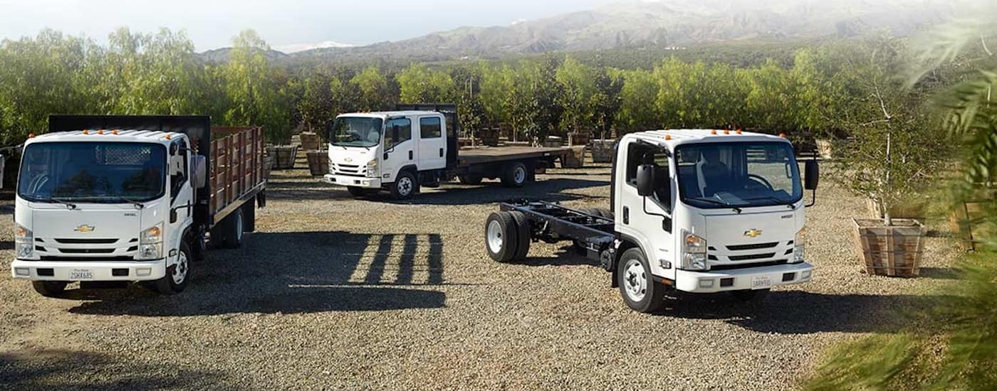 Three white Chevy commercial vehicle flatbed configurations are parked in an orchard.