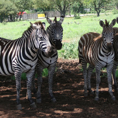 Exotic Zoo 03 400x400