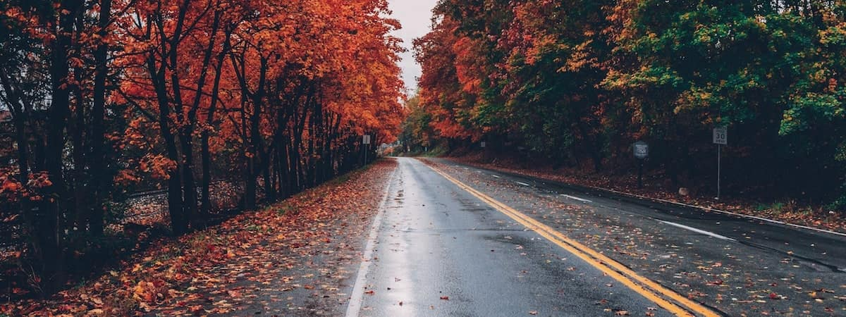 Fall leaves on a wet road