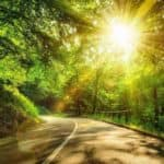 Sun shines through trees on scenic road in forest