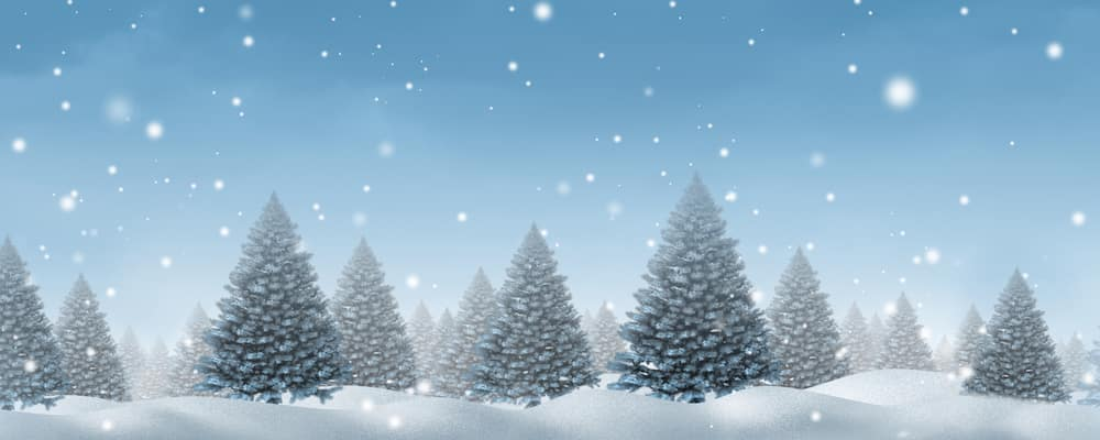 Winter snow background concept with a cold blue forest of pine trees on a snowing holiday night sky as a design element with copy space for the Christmas season and festive celebration of for the time of giving.