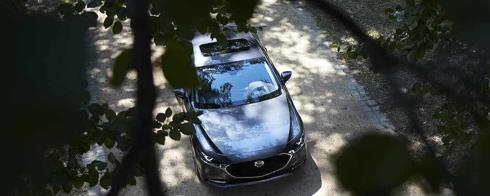 2019 Mazda3 sedan top view through leaves of tree