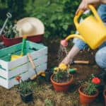 A photo of a person wearing a denim top and denim pants squatting in a garden. You can see the person from the collar bones down. They are using a yellow watering can to water a few small pots of flowers. Thee is a white crate with gardening supplies to the right of the person.