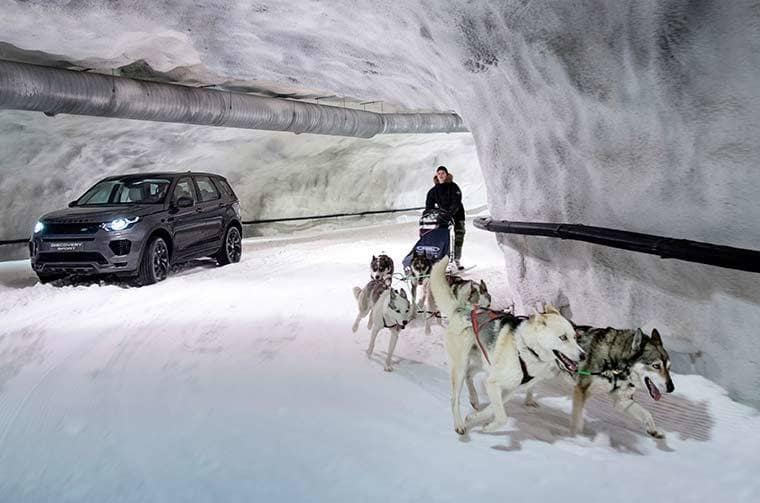 The Discovery Sport is Running With the Dogs